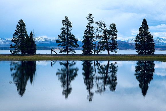 Yellowstone Reflected